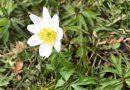 Redaktionsbloggen: Vår, pollen, hundar och högklassig leverans i svensk långdistanslöpning